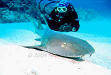 Belize - Diver with Nurse Shark