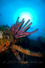 underwater photography of Curacao sunken barge