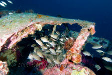 Underwater photography of North Carolina ship wrecks and sharks.